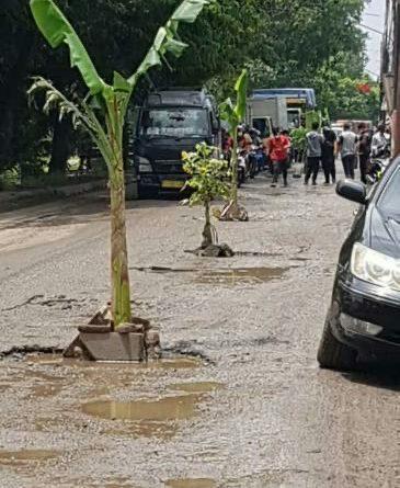 Pohon Pisang Tumbuh Dadakan di Tengah Jalan Selapajang
